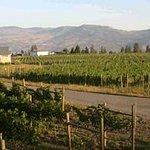 Kalala Organic Vineyard