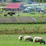 McCully's Hill Farm Foto