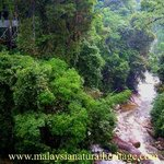 Sungai Sedim Recreational Forest