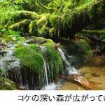 Photo de Yakushima Tour Guide Authen - Day Tour