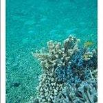Ishigaki Island Eco Tour Day Tour