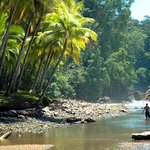 Tree of Life Tours / Pacific Journeys