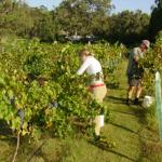 James' Hunter Valley Wine and Vineyard Tours Photo