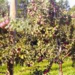 Choice Orchards Photo