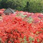 Kasama Tsutsuji Park
