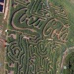 Corn Dawgs Corn Maze