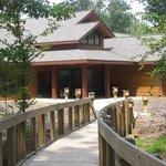 Louisiana State Arboretum Photo