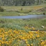 Foto de Dutch Creek Ranch