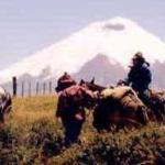 Foto de Isla de Banos Horse Riding