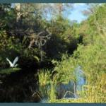 Beauty of the Everglades
