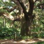 Washington Oaks Gardens State Park