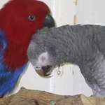 Friends Of The Aviary Photo
