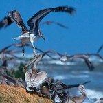 Breton National Wildlife Refuge - Chandeleur Islands