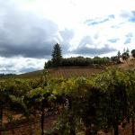 Gianelli Vineyards Winetasting Resmi