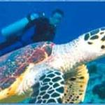 Gone Diving Hervey Bay Photo