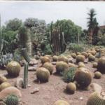 Foto de Sarkaria Cactus Garden