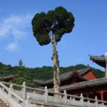 Sizu Temple Foto