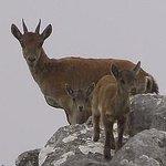 Iberian Wildlife Tours Foto