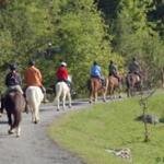 Vermont Icelandic Horse Farm 사진