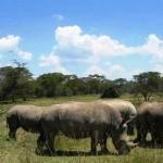 Its Safaris Day Trips Bild