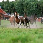 Jultorp Ranch