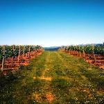 Kason Vineyards Foto