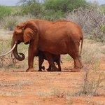 Kingi Safaris - Private Day Tours Foto