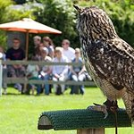Liberty's Owl Raptor and Reptile Centre