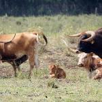 Makani Olu Ranch Photo