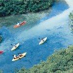 Mangrove Information Center Kayak & Snorkel Excursions Foto