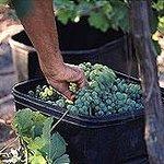 Margaret River Vintage Wine Tours Photo