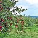 Masker Orchards Photo
