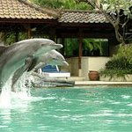 Melka Excelsior Dolphin & Wildlife Resort