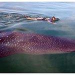Mextreme Travel Whale Shark Tour Photo