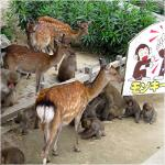 Awajishima Monkey Center Foto