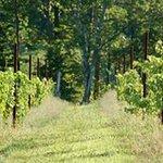 Mountfair Vineyards Foto