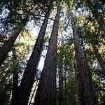 Muir Woods Walking Tours