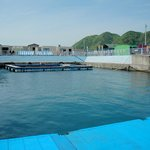 Muroto Dolphin Center