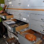 Les collections du Muséum d'Histoire Naturelle d'Aix-en-Provence