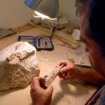 Les paléontologues du Muséum d'Histoire Naturelle d'Aix-en-Provence