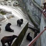 Foto de Okuhida Bear's Park