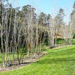 Regional Parks Botanic Garden Foto