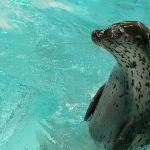 Omuta City Zoo Image