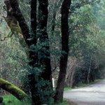 Adobe Canyon Road