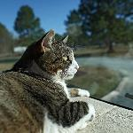 Our cat Molly admiring the KOA view