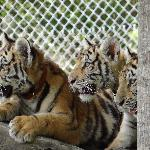 Three of our cubs