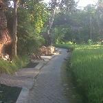 Walk into Ubud