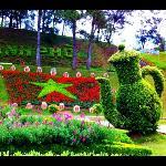 very cute topiary
