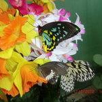 altre farfalle