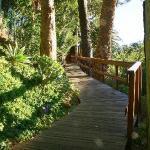 Walkway to Tree House room